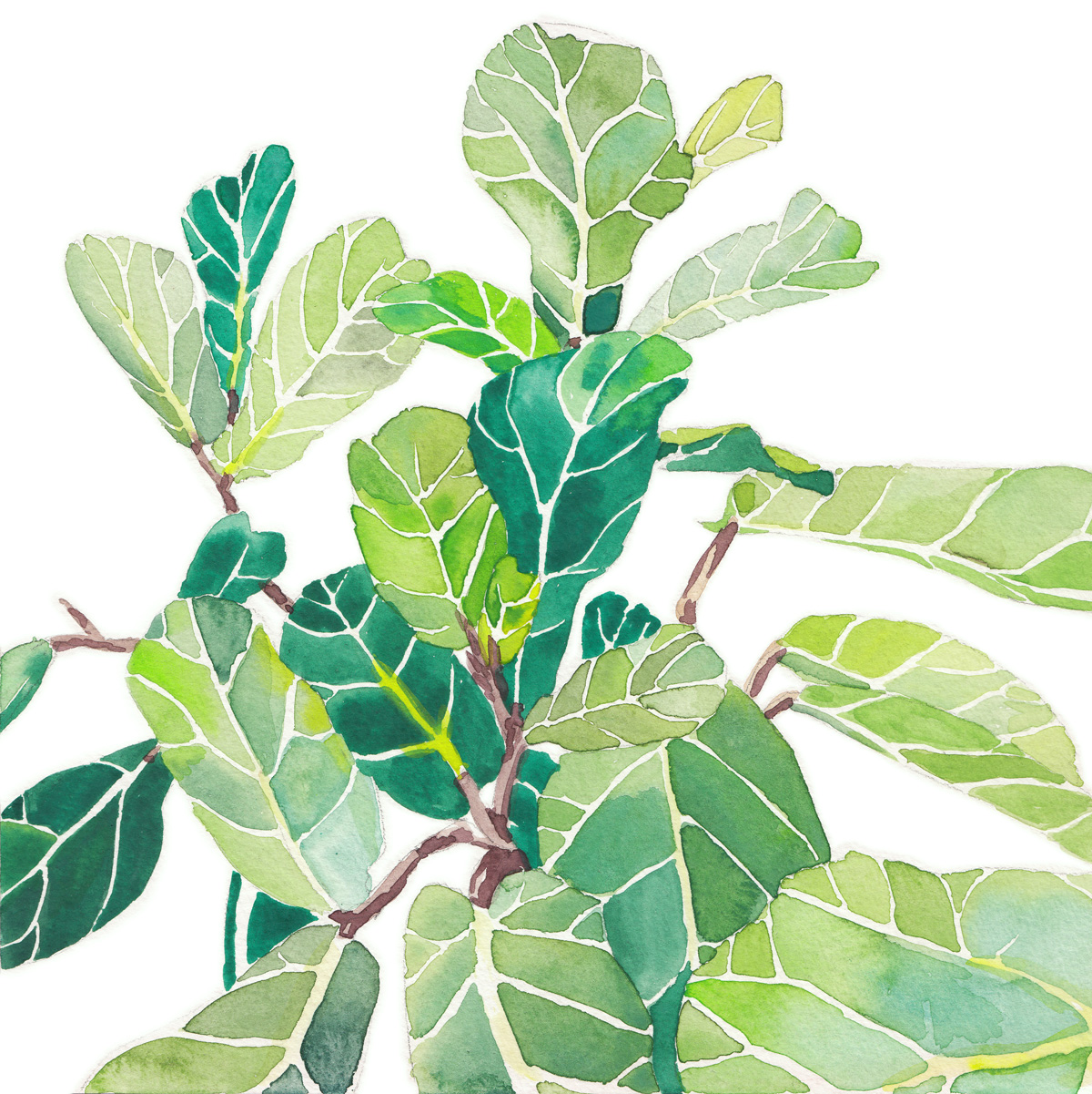 Watercolo Fiddle Leaf Fig (1)