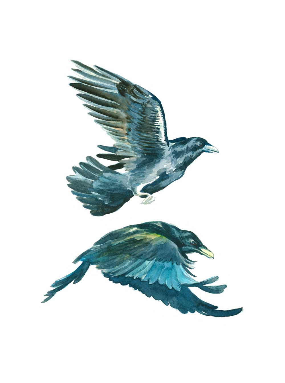 Two Ravens watercolor illustration